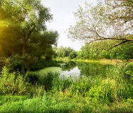 Idyllic landscape. Idyllic river landscape in the forest in sunny morning Stock Photography