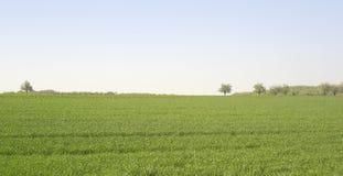 Idyllic landscape at spring time. Idyllic rural landscape at spring time in Hohenlohe (Germany Royalty Free Stock Photos