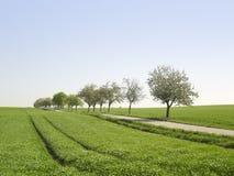 Idyllic landscape at spring time. Idyllic rural landscape at spring time in Hohenlohe (Germany Royalty Free Stock Photography