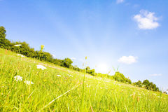 Idyllic lawn Royalty Free Stock Images