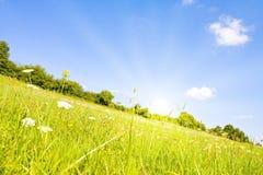 Idyllic lawn Royalty Free Stock Images