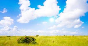 Idyllic lawn with sunlight Royalty Free Stock Photos