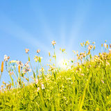 Idyllic Lawn With Sunlight Royalty Free Stock Photography