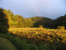 Idyllic meadow. An idyllic meadow in the New Zealand wilderness at dawn, with rainbow stock photos