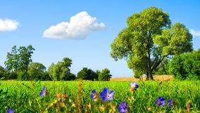 Idyllic meadow at nice weather. Idyllic landscape with fresh green meadow, trees, spring flowers, blue sky and white clouds Stock Photos