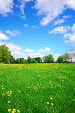 Idyllic meadow. In summer  and blue sky Stock Image