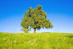 Idyllic meadow with tree Royalty Free Stock Photos