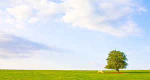 Idyllic meadow with tree Stock Image