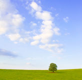 Idyllic meadow with tree Stock Image