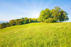 Idyllic meadow with tree Stock Photography