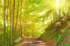 Idyllic mountain forest in sun light. With footpath Stock Photos