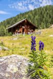 Idyllic mountain landscape in the alps: Mountain chalet, meadows and blue sky. Mountain chalet in Austria: Idyllic landscape in the Alps hut alpine cabin pasture stock image