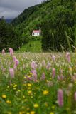 Idyllic mountain landscape in the bavarian alps with a meadow and a church royalty free stock photo