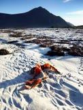 Scandinavia, Norway, Nordic Rugged Landscape, Lofoten Islands. Idyllic Norwegian coast scene - Mountains, white sandy beach with seaweed by sunrise on Lofoten stock photo