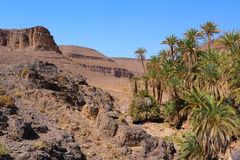 Idyllic oasis in the Sahara Desert, Marocco, Uarzazat Royalty Free Stock Photo