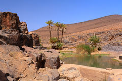 Idyllic oasis in the Sahara Desert, Marocco, Uarzazat Stock Photos
