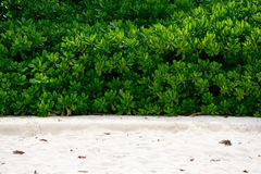 Idyllic plant on the beach of Andaman Sea Royalty Free Stock Images