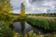An idyllic pond, surrounded by autumn trees and green grass Stock Photos