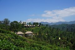Idyllic Resort in Tea Plantation stock image