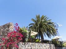 Idyllic restaurant terrace with pam tress and sun shade. Stock Photo