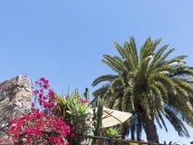 Idyllic restaurant terrace with pam tress and sun shade. Stock Photography