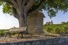 Idyllic resting place under walnut tree in the background a vineyard with pilgrimage church Maria in the vineyard and blue sky in stock photo