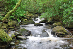 Idyllic River in the green woods. In Ireland Royalty Free Stock Images