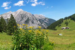 Idyllic Rocky Mountains Scenery. Austria, Alps, near Walderalm Stock Photography