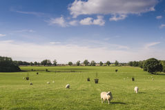 Idyllic rural farmland, Cotswolds UK Royalty Free Stock Photo