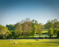 Idyllic rural farmland, Cotswolds UK Stock Photo