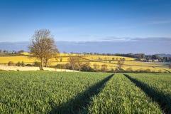 Free Idyllic Rural Landscape, Cotswolds UK Stock Photos - 31278593