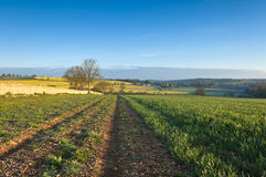 Free Idyllic Rural Landscape, Cotswolds UK Stock Photo - 42116690