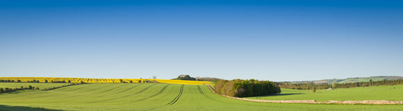 Idyllic rural landscape, Cotswolds UK. Idyllic rural view of pretty farmland and healthy livestock, in the beautiful surroundings of the Cotswolds, England, UK Royalty Free Stock Image