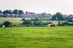 Idyllic Rural Landscape in England Stock Photo
