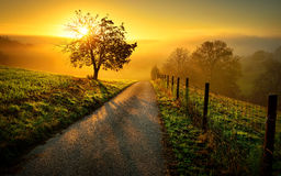 Idyllic rural landscape in golden light. Idyllic rural landscape on a hill with a tree on a meadow at sunrise, a path leads into the warm gold light Stock Photo