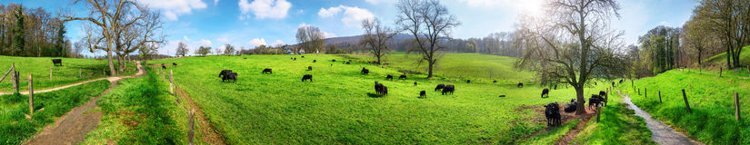 Idyllic rural landscape panorama Royalty Free Stock Photos