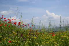 Idyllic rural scene with bright meadow Royalty Free Stock Photography