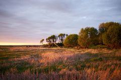 Idyllic rural scene form North Dakota at sunset. Idyllic rural scene form North Dakota with a trees at the horizon of a field against cloudy sky at sunset Stock Photos