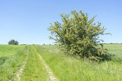 Idyllic rural scenery. With field path at spring time in Southern Germany Royalty Free Stock Photo