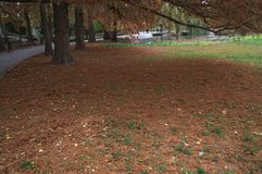Idyllic scene in park with trees and fallen leaves around.  Stock Photos