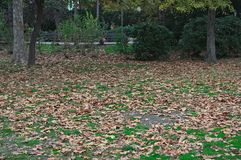 Idyllic scene in park with trees and fallen leaves around.  Royalty Free Stock Photos