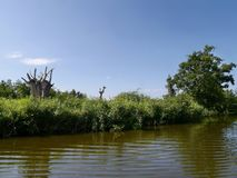Idyllic scene of riverbank. Dying trees form interesting shape Royalty Free Stock Photos