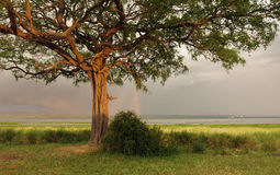 Idyllic scenery around Lake Albert in Uganda Stock Photography
