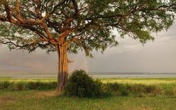 Idyllic scenery around Lake Albert in Uganda. Stormy scenery with rainbow around Lake Albert in Uganda (Africa) at evening time Stock Photography