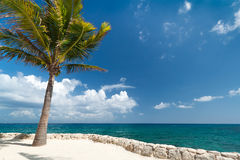 Idyllic scenery of Caribbean sea. With lonely palm tree Stock Image