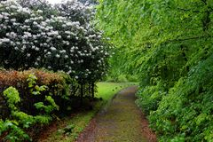 Path in lush park landscape at rainy day in spring royalty free stock images