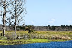 Idyllic and Serene Story Book Setting of Old Trees Overlooking a Lake and Nature Preserve in Florida stock photography