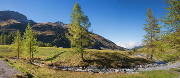 Idyllic sertig valley with mountain creek and larch trees Royalty Free Stock Photos