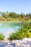 Idyllic shore landscape with pebble beach, blue water, flowers and wood. Idyllic shore landscape: Blue clear water, flowers and pebble beach river knigseer ache royalty free stock images