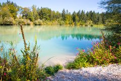 Idyllic shore landscape with pebble beach, blue water, flowers and wood. Idyllic shore landscape: Blue clear water, flowers and pebble beach river knigseer ache stock images